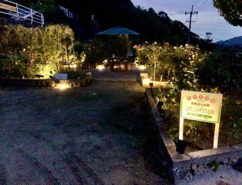 田尻ばら園ライトアップはじめました