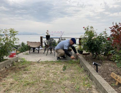 田尻ばら園、オリーブ園草取り作業