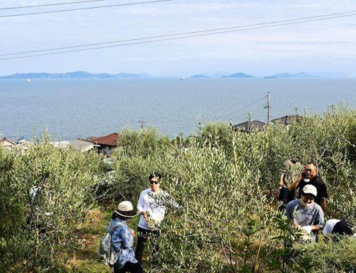 田尻のオリーブ収穫祭