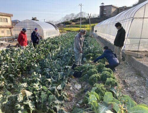 田尻イタリア野菜産地、トキタ種苗さんのご訪問