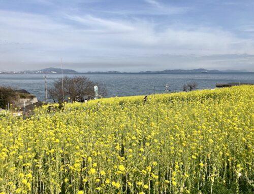 菜の花畑に来られる方へのご案内(2021年春)